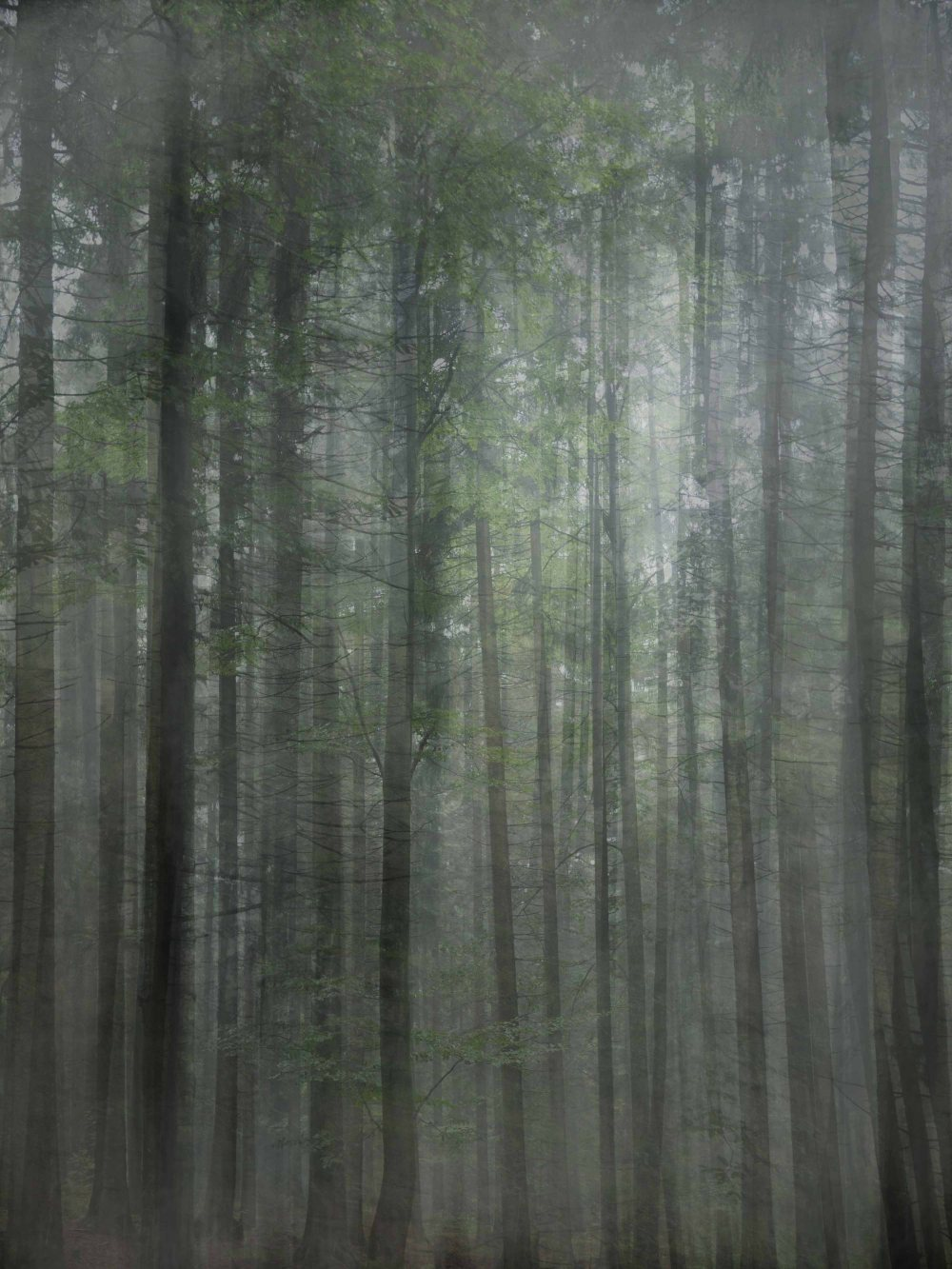 the forest2