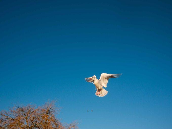 birdwatching14