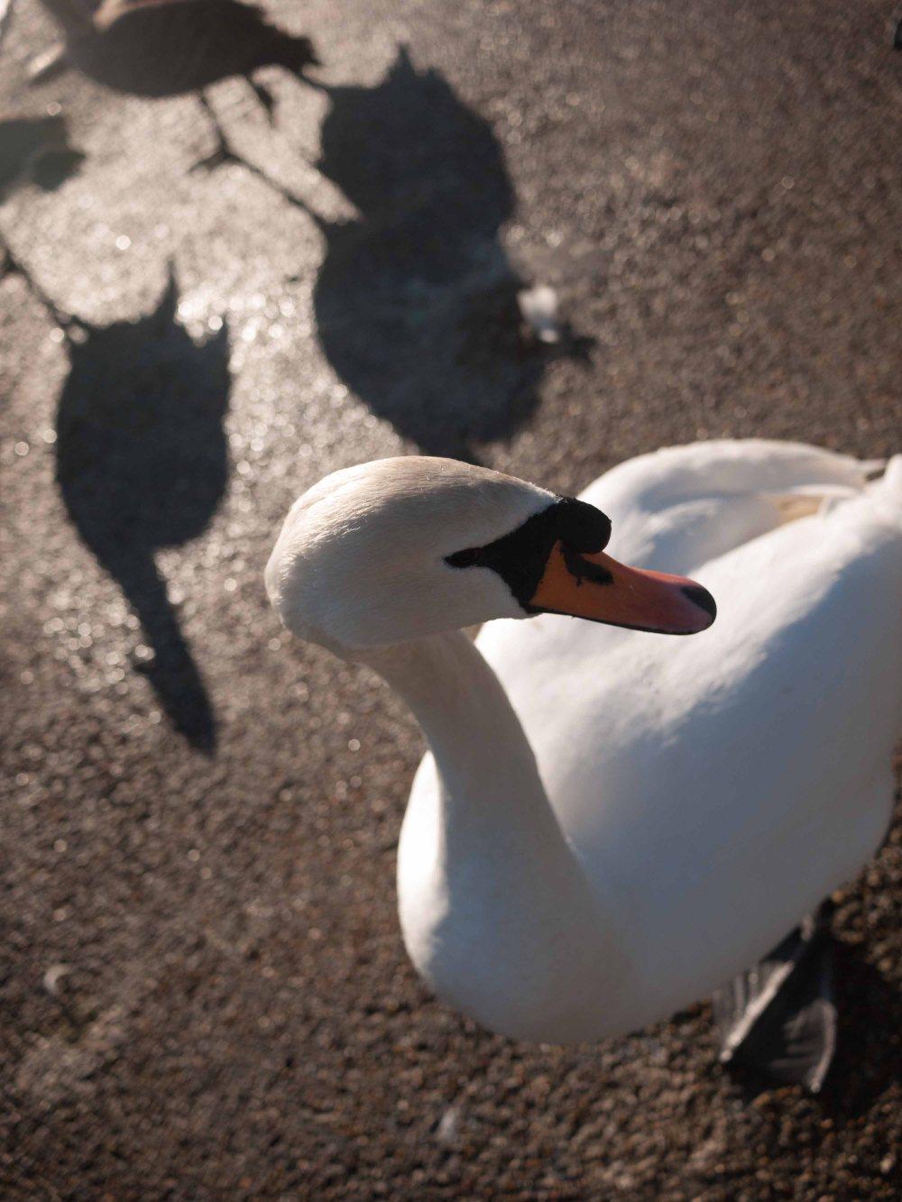 birdwatching24