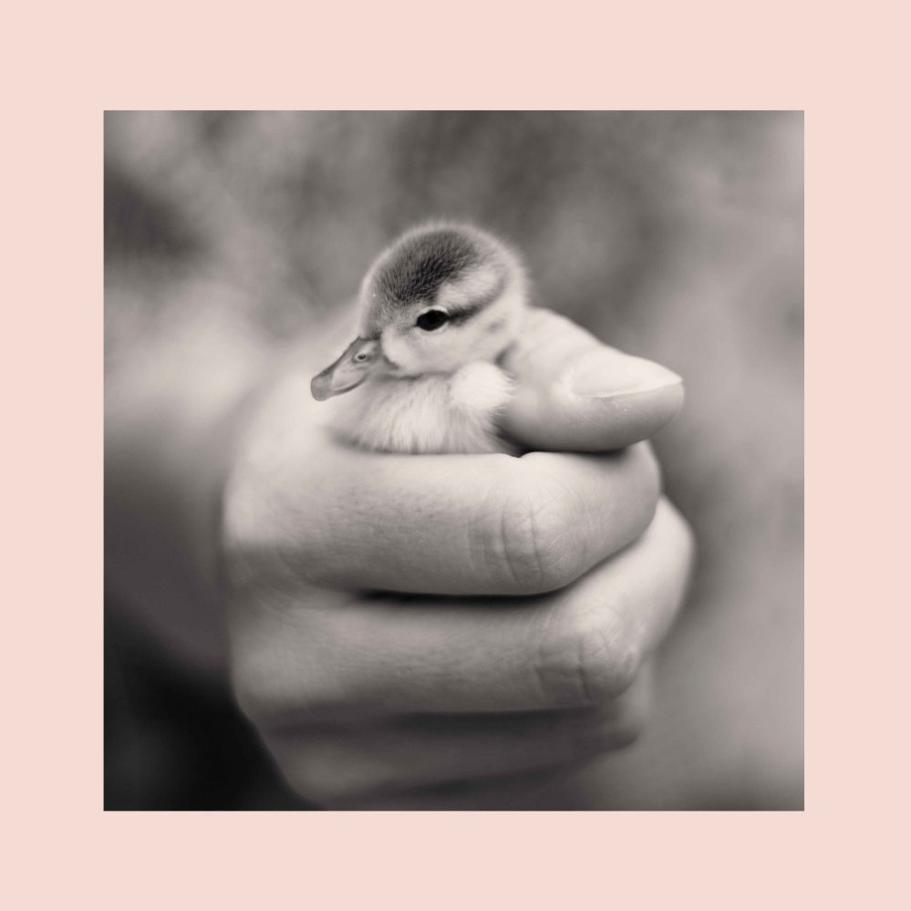 little duckling sneak preview