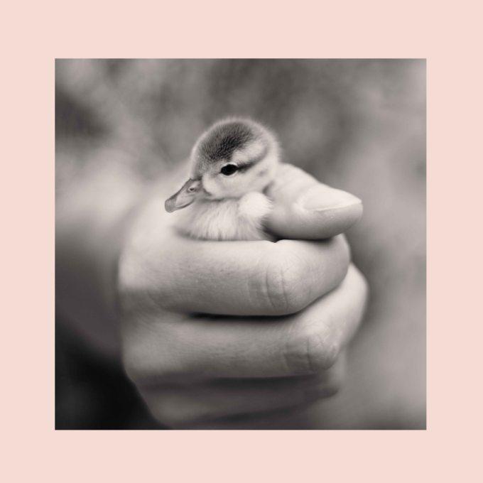 little duckling sneak preview
